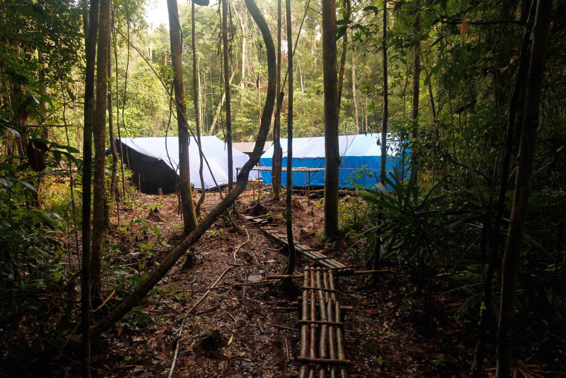 b1b24da6f7c482 Indonesia: Rungan Forest Ecology - Institute for Field Research